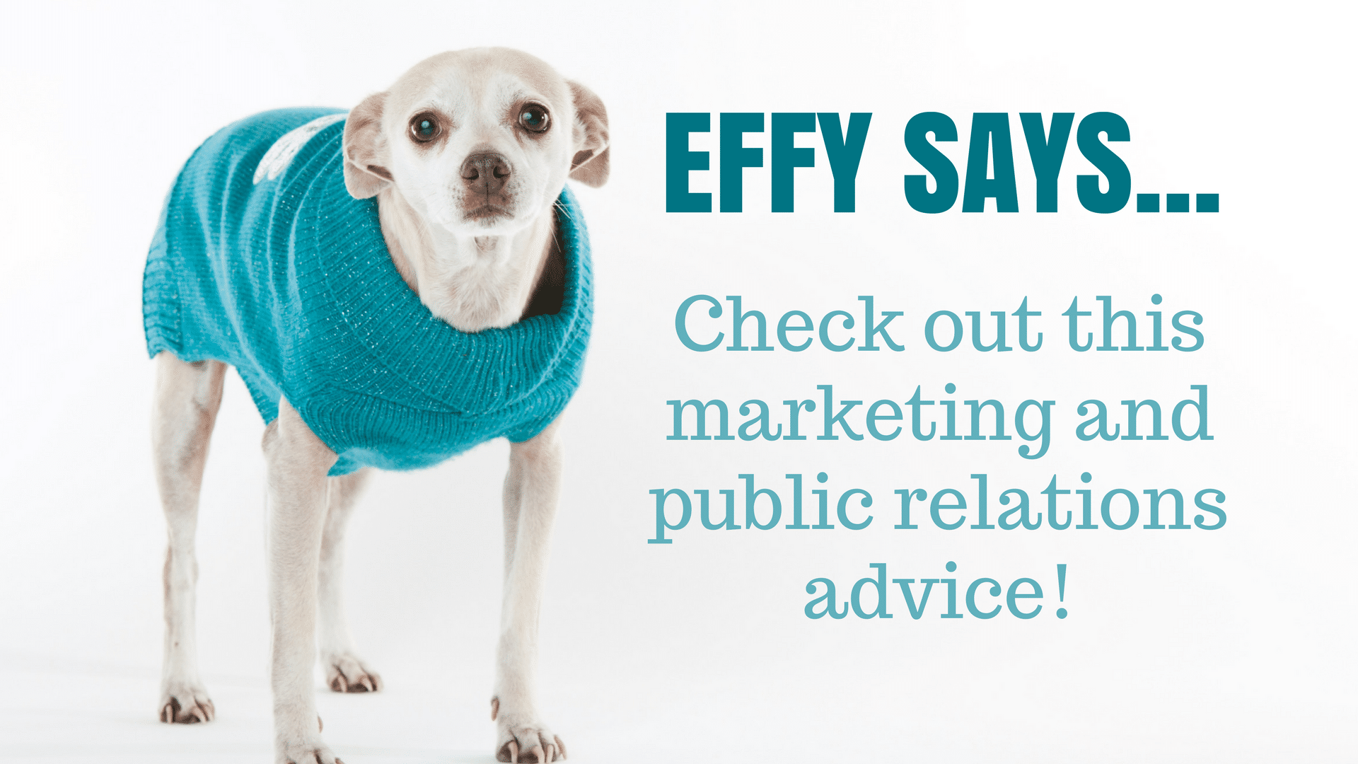 Effy says… Don't Pitch an Advertisement!