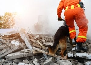 A search and rescue man and dog walking over rubble.