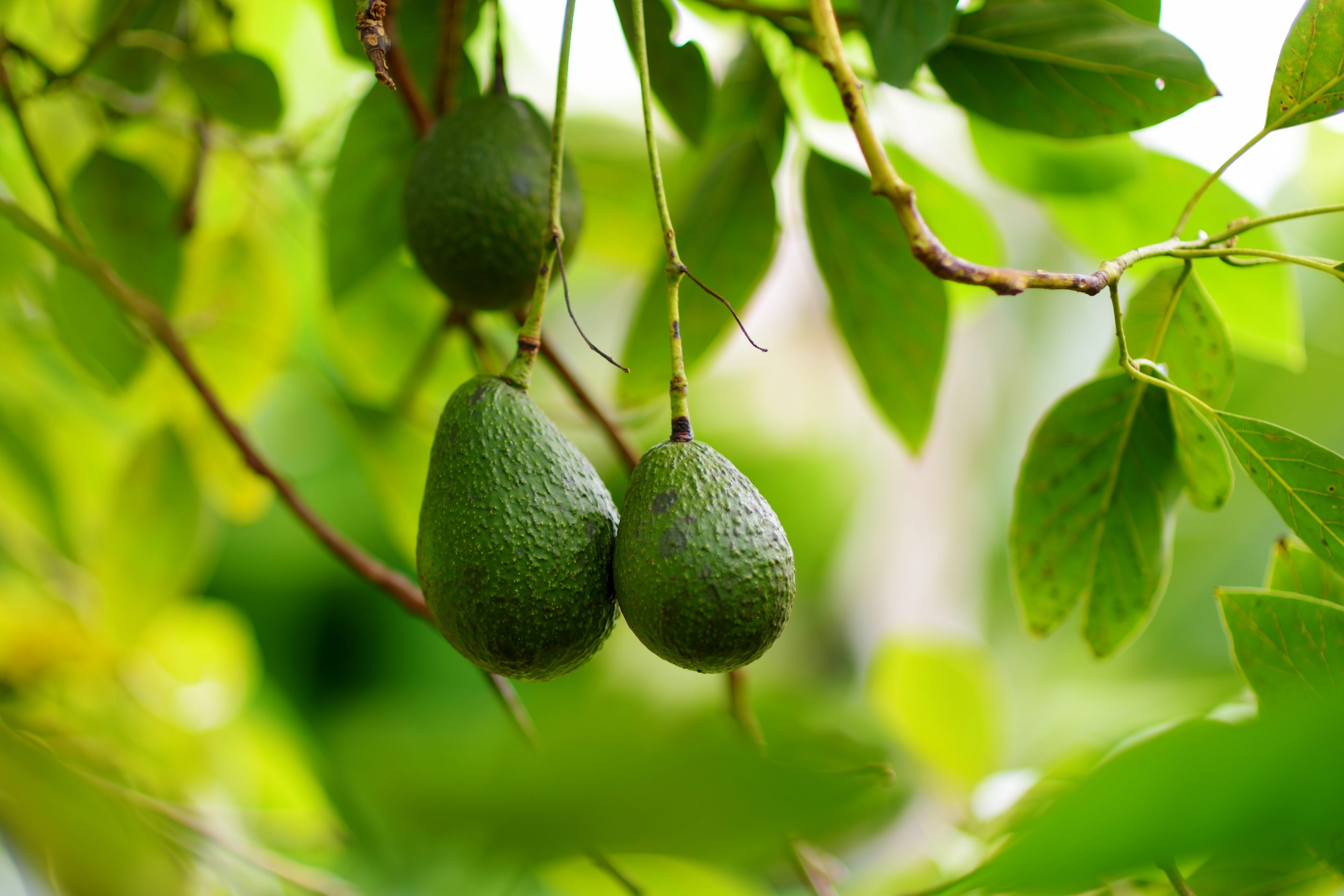 4 Excellent PR Lessons From Growing An Avocado Tree