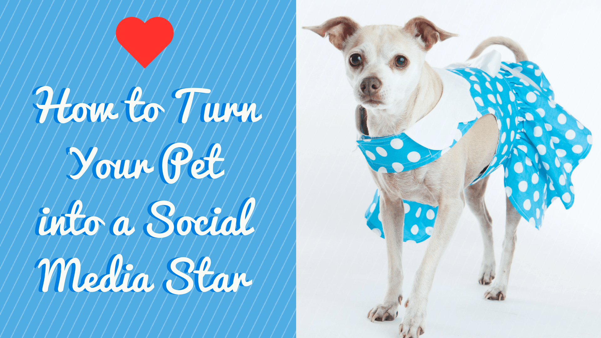 How to Turn Your Lovable Pet into a Social Media Star