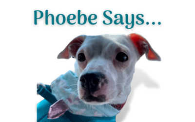 Phoebe Says … Don't be Afraid to Update Older Content