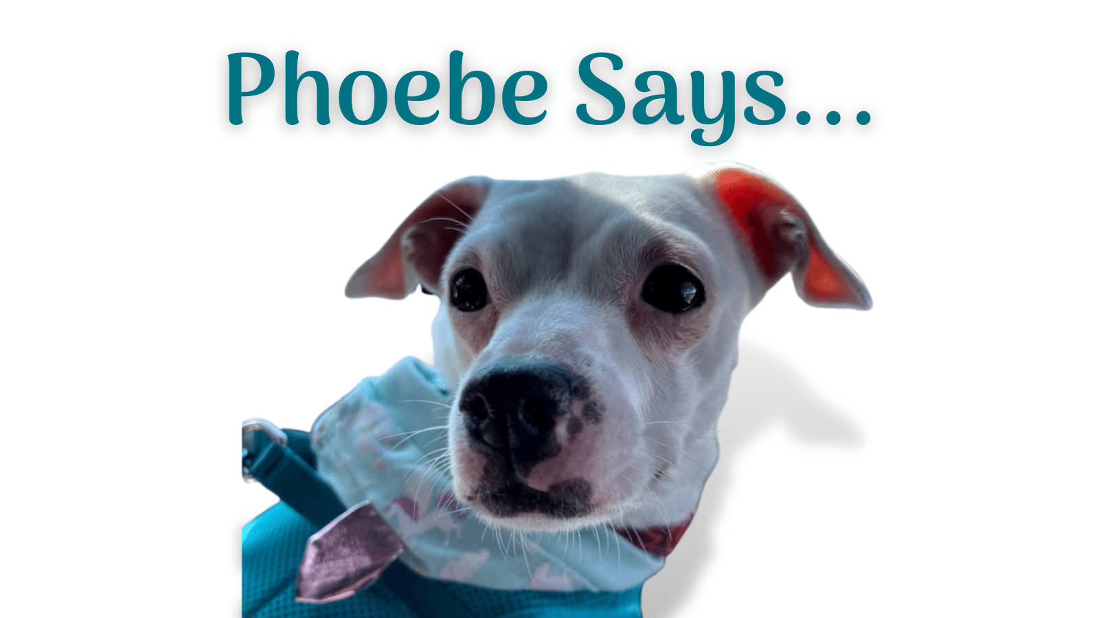 Phoebe Says … Focus On Quality Content