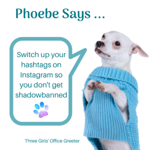 Small White Dog Standing with speach bubble sharing Instagram advice