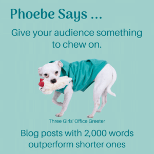 Small white dog chewing on a toy with blog advice