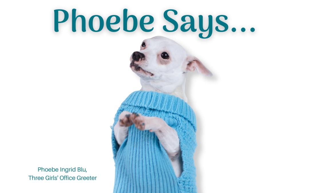 Phoebe Says … Take A Peek At This Blogging Statistic!