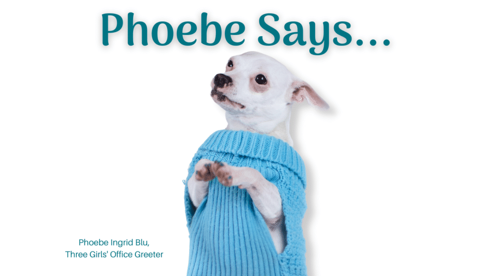 """A dog in a sweater with the words, """"Phoebe Says"""". Social media pets"""