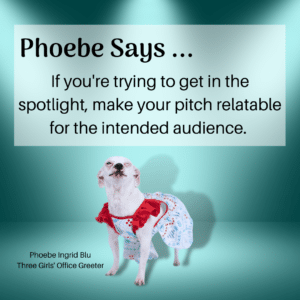 Small white dog standing in the spotlight with pitching advice.