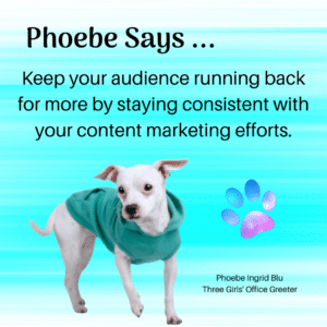 Small White Dog Giving Content Marketing Efforts