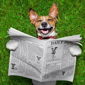 A smiling dog holds up a newspaper
