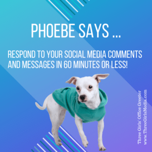 Phoebe, a small white dog in teal sweater, giving social media advice