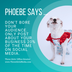 Phoebe, a small white dog, shares her social media posting advice